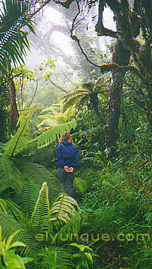 photo of the rain forest in puert rico