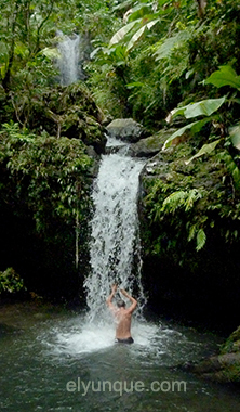Juan Diego Falls in the rainforest