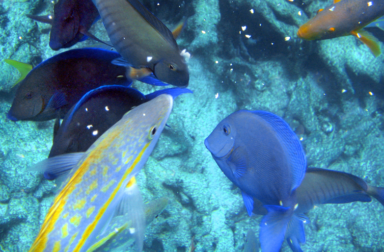 Snorkelers give the caribbean reef fish oats and bread for Caribbean reef fish