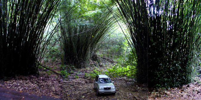 Rio Abajo nature reserve is in the karst area and has unusual bamboo plantings
