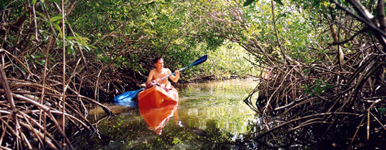 The mangrove lagoons by kayak