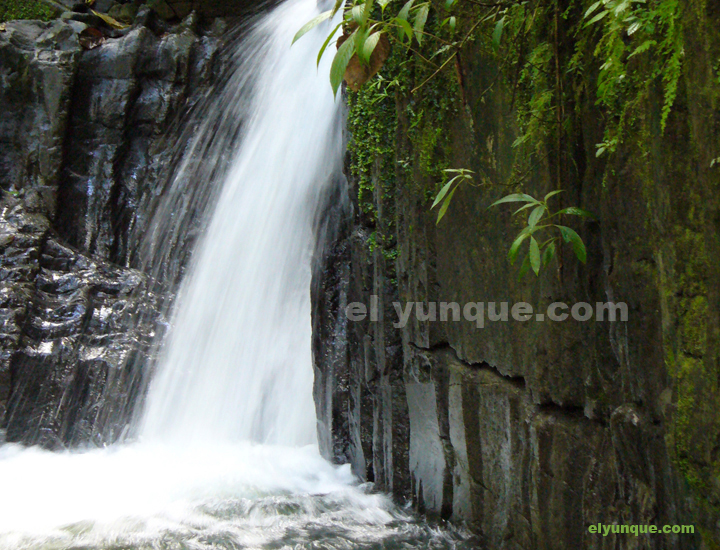 El Yunque rainforest in Puerto RIco Juan Diego lower falls.