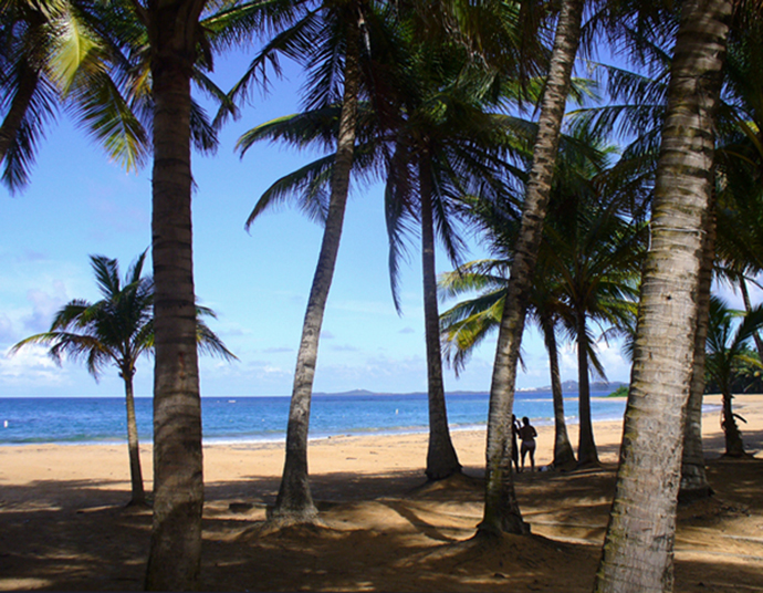 Coconut trees on Playa Azul  Luquillo