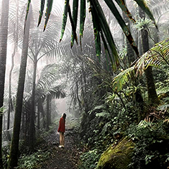 One of the many trails in the el yunque rainforest