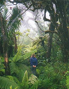 El yunque dwarf forest2 el 20yunque 20rainforest 20237x304