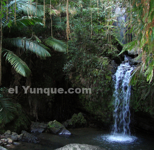 El Yunque rain forest in Puerto Rico/animals/plants/puerto rican ...
