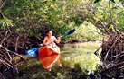 kayak the mangrove canals