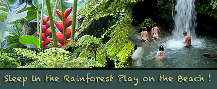 El Yunque rainforest lodging and villa rentals