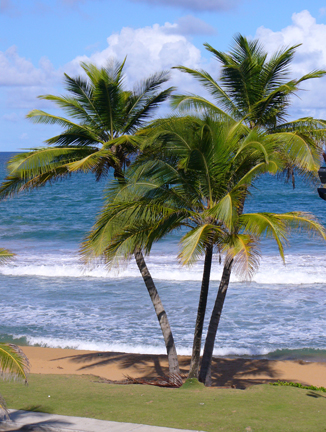 coconut trees from the balcony window